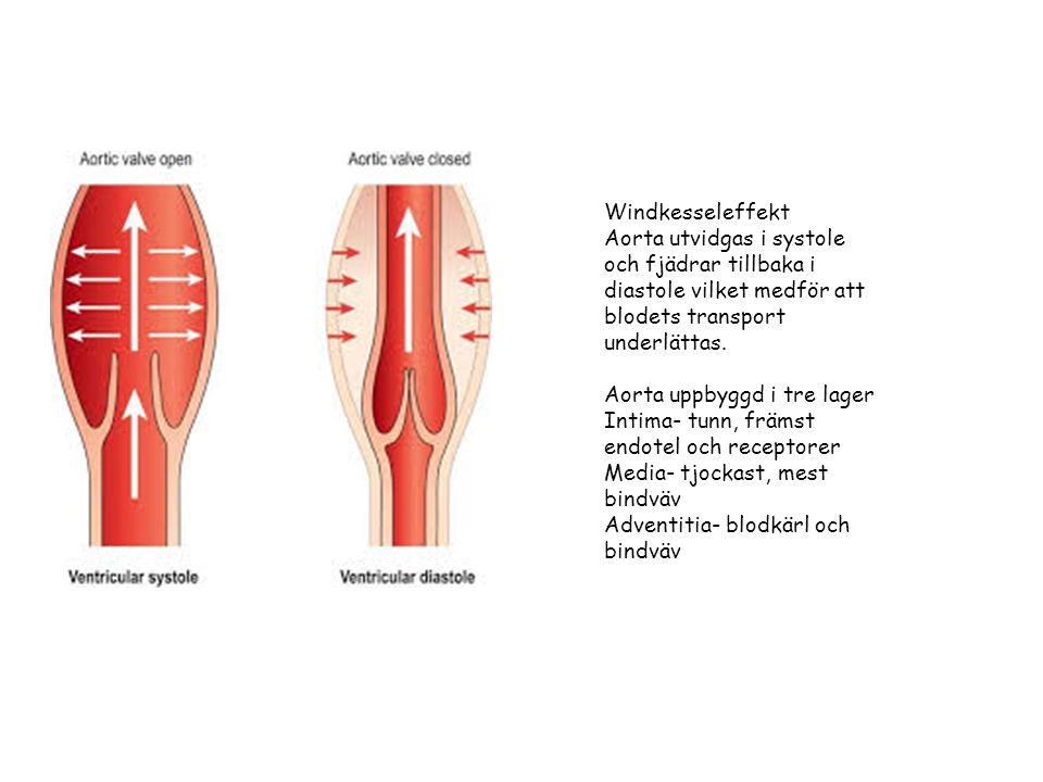 Cystisk media degeneration Orsaker: Hypertoni Annuloaortär ektasi Ärftlig bindvävssjukdom (Marfan, Ehlers-Danlos) Kongenital (bicuspid aortaklaff, coarctatio aortae) Trauma ( trubbigt våld, iatrogent) Graviditet Riskfaktorer: rökning, kokain o amfetaminmissbruk