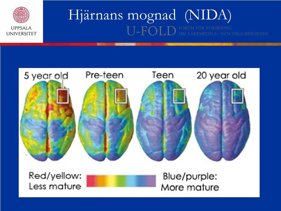 Hjärnans mognad (NIDA)