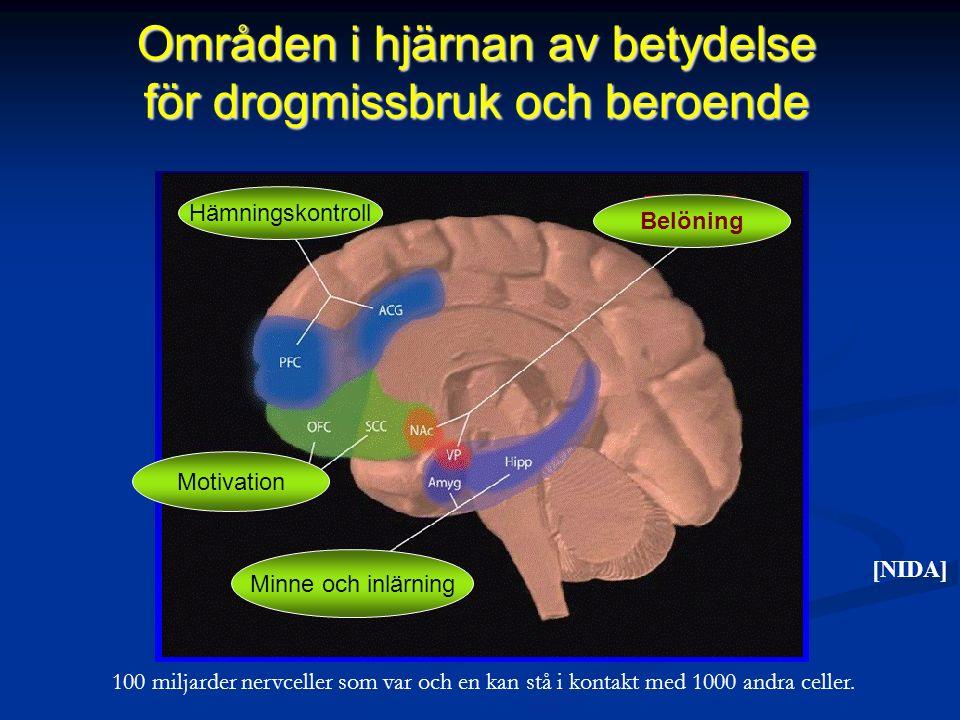 Områden i hjärnan av betydelse för drogmissbruk och beroende Belöning Hämningskontroll Motivation Minne och inlärning [NIDA] 100 miljarder nervceller som var och en kan stå i kontakt med 1000 andra celler.