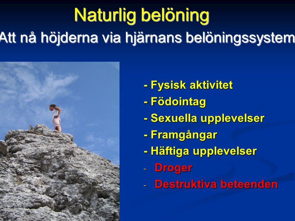 - Fysisk aktivitet - Födointag - Sexuella upplevelser - Framgångar - Häftiga upplevelser - Droger - Destruktiva beteenden Naturlig belöning Att nå höjderna via hjärnans belöningssystem Att nå höjderna via hjärnans belöningssystem