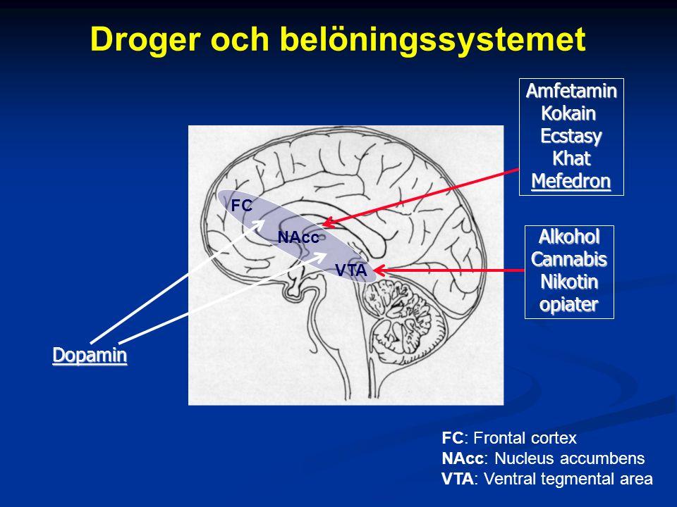Droger och belöningssystemet VTA NAcc FC FC: Frontal cortex NAcc: Nucleus accumbens VTA: Ventral tegmental area Dopamin AmfetaminKokainEcstasyKhatMefedron AlkoholCannabisNikotinopiater