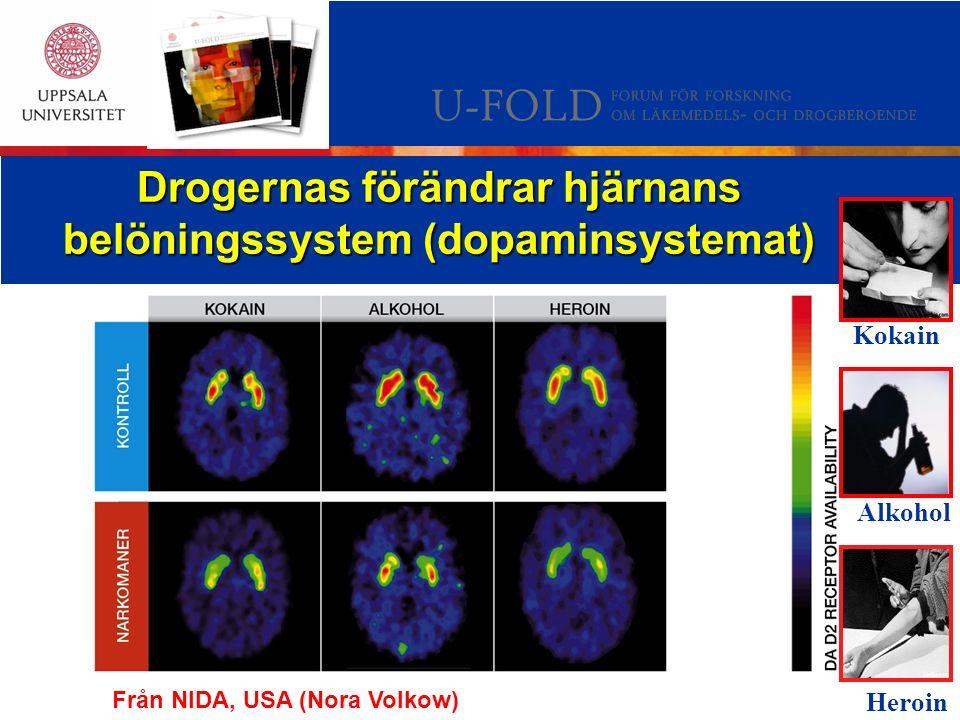 Drogernas förändrar hjärnans belöningssystem (dopaminsystemat) Kokain Heroin Alkohol Från NIDA, USA (Nora Volkow)