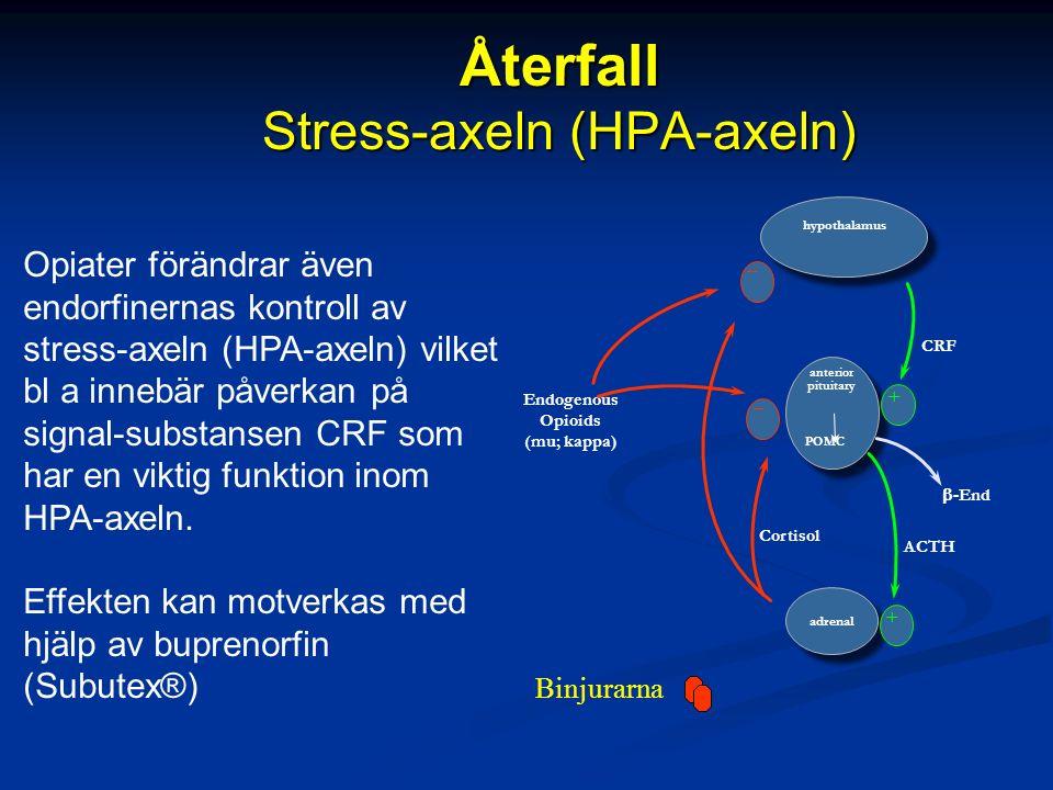 Återfall Stress-axeln (HPA-axeln) Opiater förändrar även endorfinernas kontroll av stress-axeln (HPA-axeln) vilket bl a innebär påverkan på signal-substansen CRF som har en viktig funktion inom HPA-axeln.