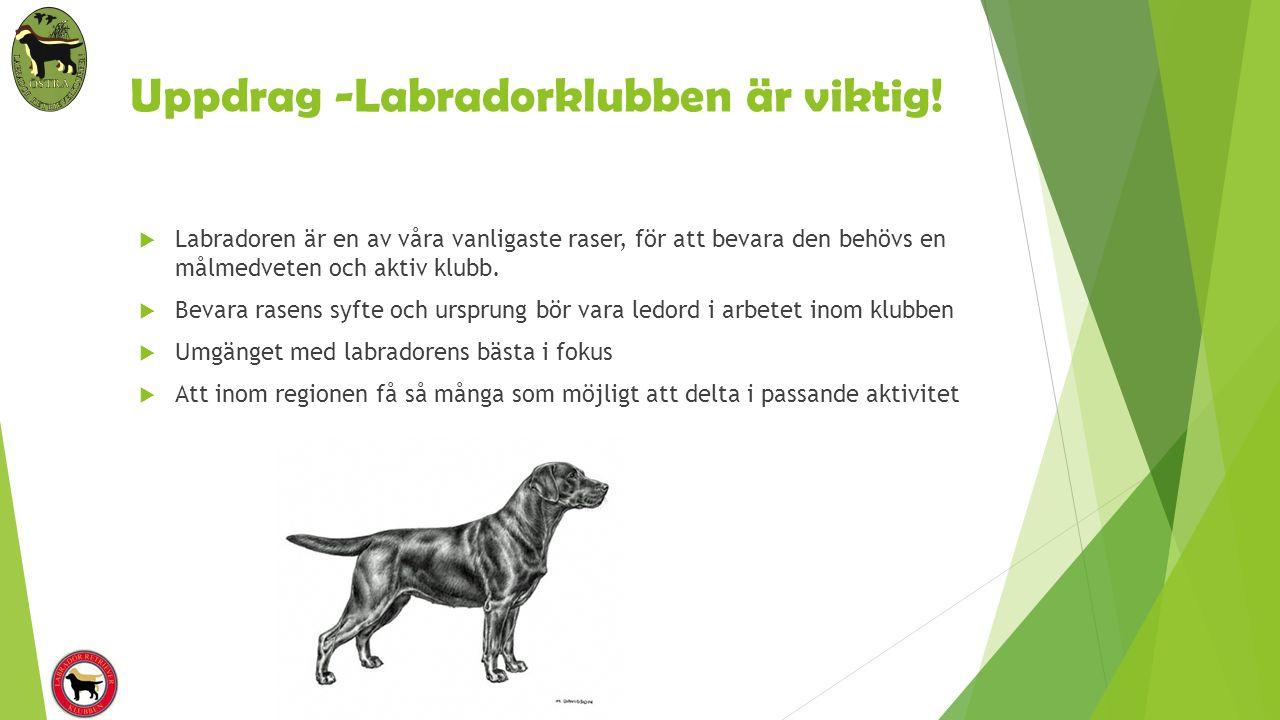 Uppdrag -Labradorklubben är viktig!  Labradoren är en av våra vanligaste raser, för att bevara den behövs en målmedveten och aktiv klubb.  Bevara ra