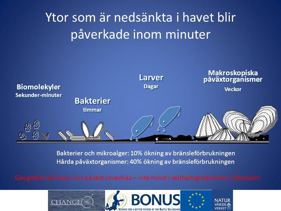 Ytor som är nedsänkta i havet blir påverkade inom minuter Bakterier timmar Bakterier timmar Biomolekyler Sekunder-minuter Biomolekyler Sekunder-minute