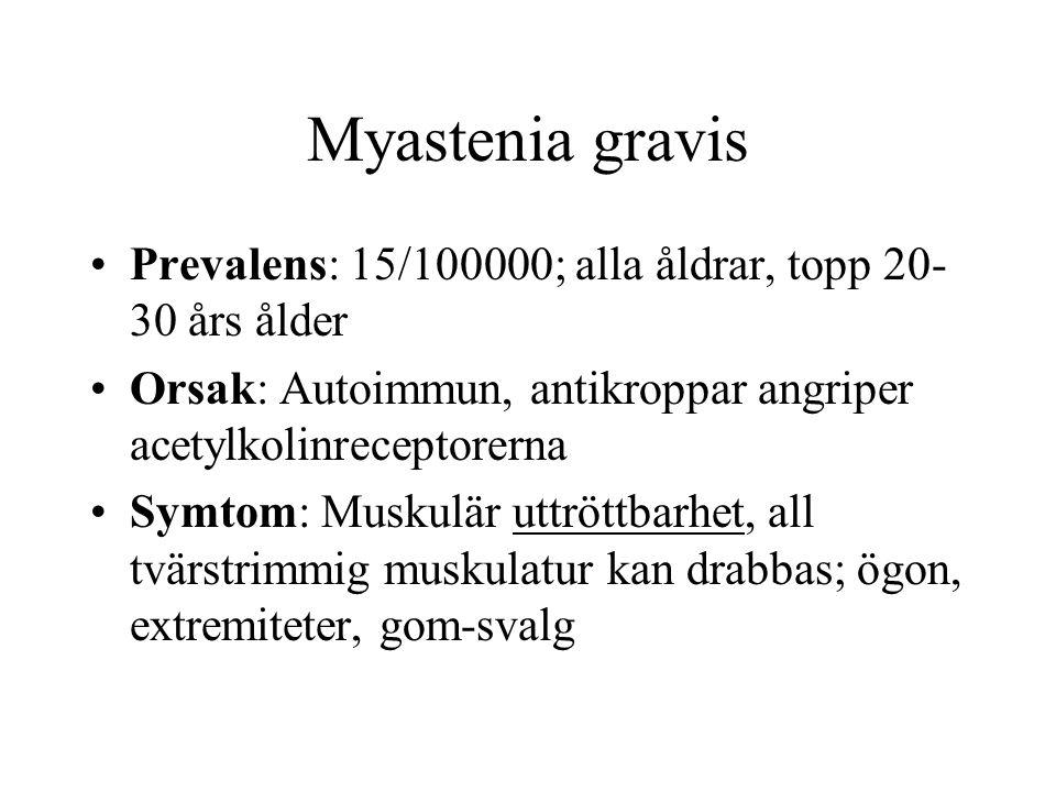 Myastenia gravis Prevalens: 15/100000; alla åldrar, topp 20- 30 års ålder Orsak: Autoimmun, antikroppar angriper acetylkolinreceptorerna Symtom: Muskulär uttröttbarhet, all tvärstrimmig muskulatur kan drabbas; ögon, extremiteter, gom-svalg