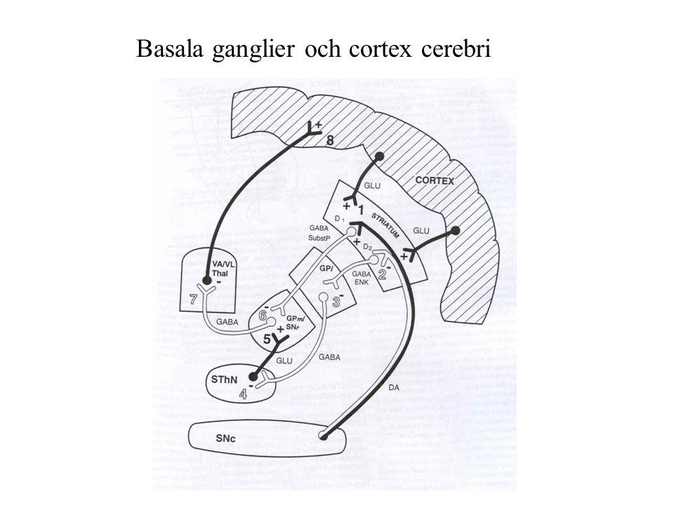 Basala ganglier och cortex cerebri