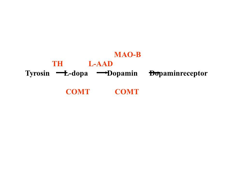 MAO-B TH L-AAD Tyrosin L-dopa Dopamin Dopaminreceptor COMT COMT