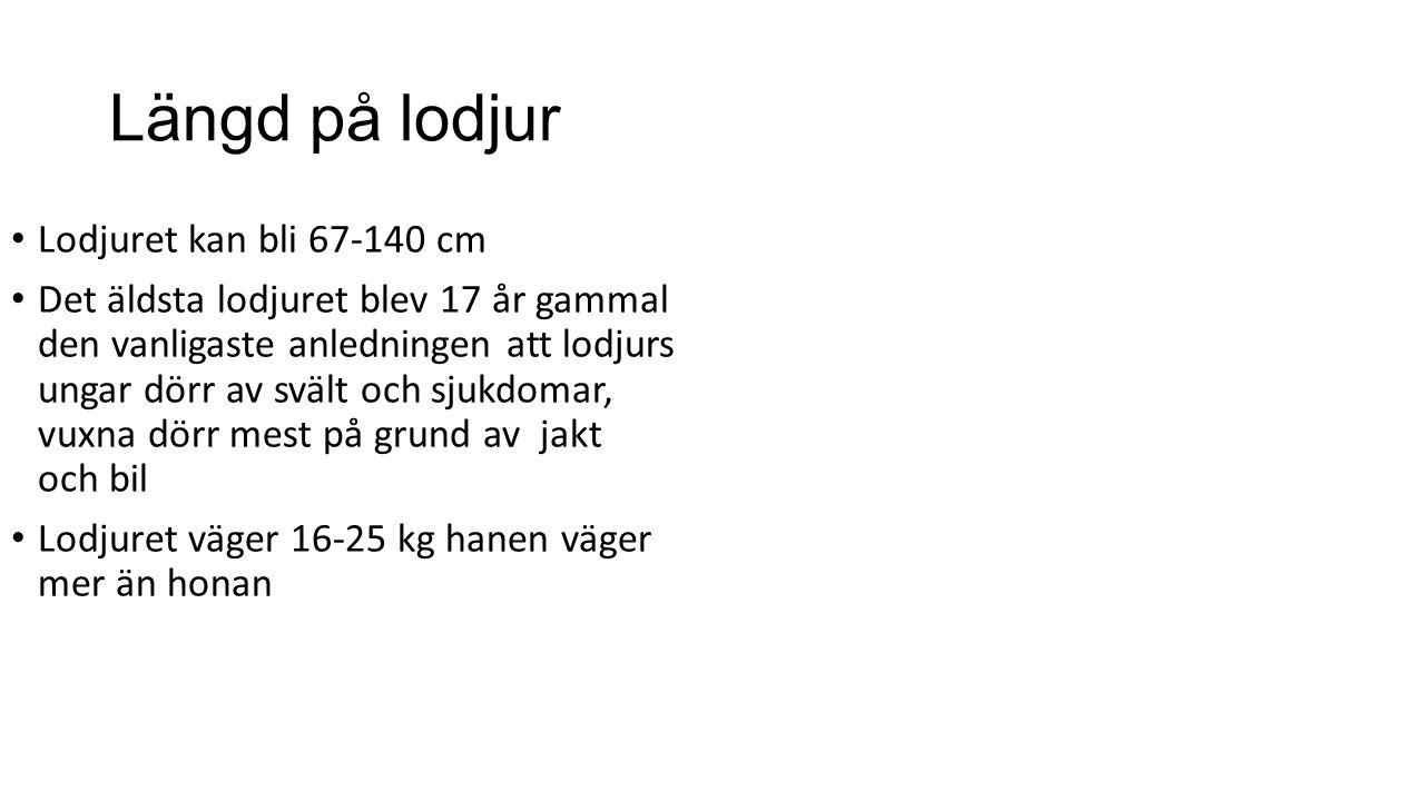 lo Det finns 840-1200 De finns i hela Sverige Den kan hör något på 4,5 km