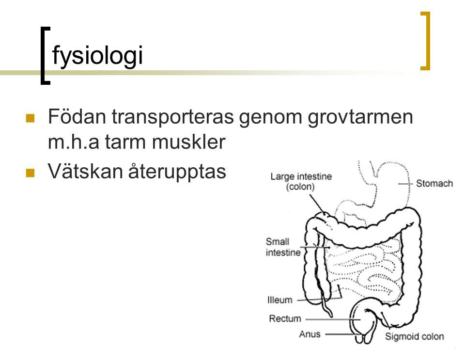 fysiologi Födan transporteras genom grovtarmen m.h.a tarm muskler Vätskan återupptas