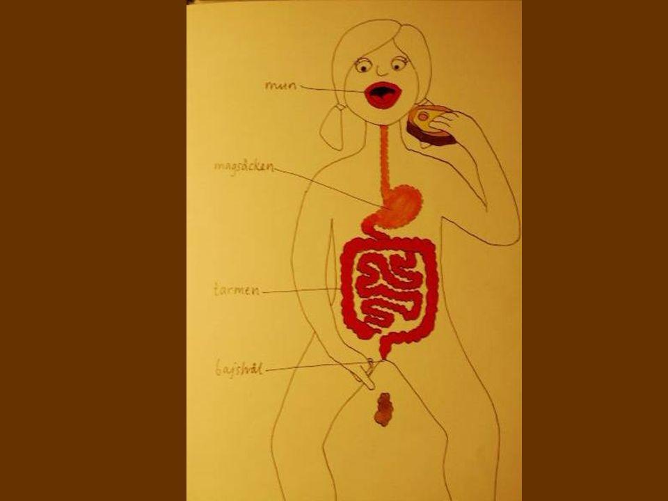 orsaker - läkemedel 68 årig kvinna, magerlagd hela livet.