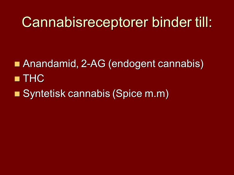 Cannabisreceptorer binder till: Anandamid, 2-AG (endogent cannabis) Anandamid, 2-AG (endogent cannabis) THC THC Syntetisk cannabis (Spice m.m) Syntetisk cannabis (Spice m.m)