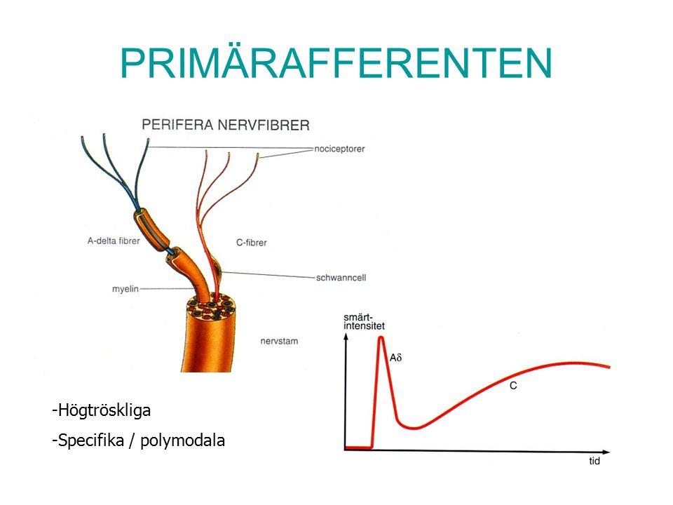 PRIMÄRAFFERENTEN -Högtröskliga -Specifika / polymodala