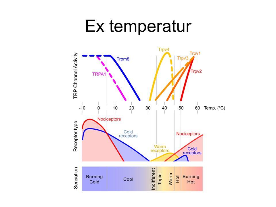 Ex temperatur
