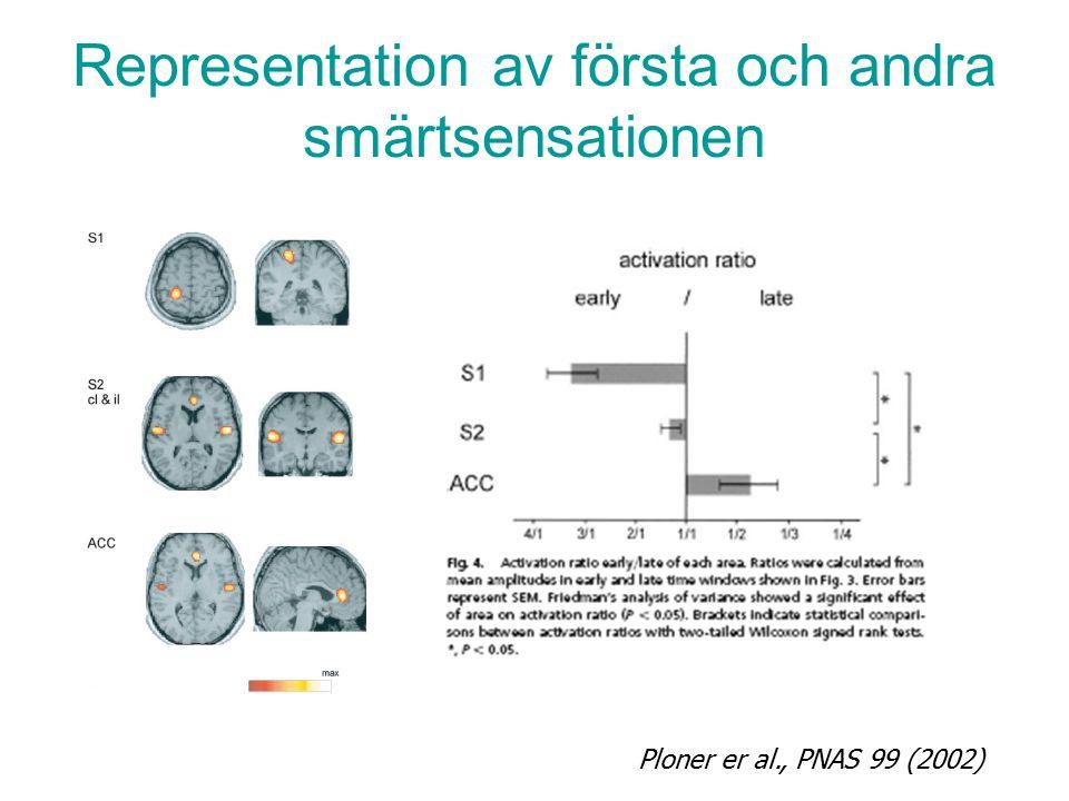 Representation av första och andra smärtsensationen Ploner er al., PNAS 99 (2002)