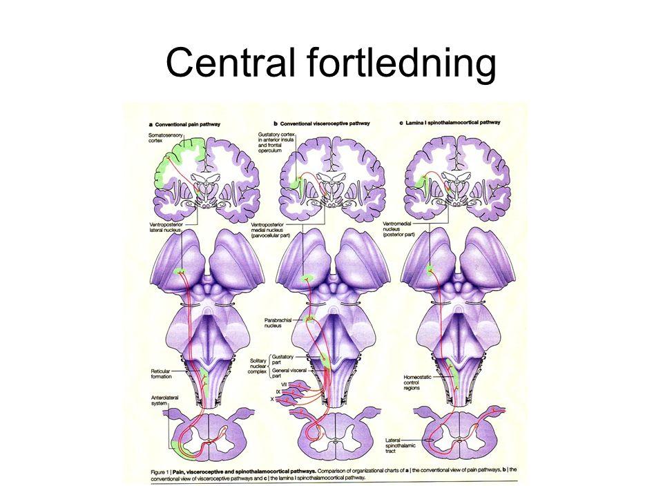 Central fortledning