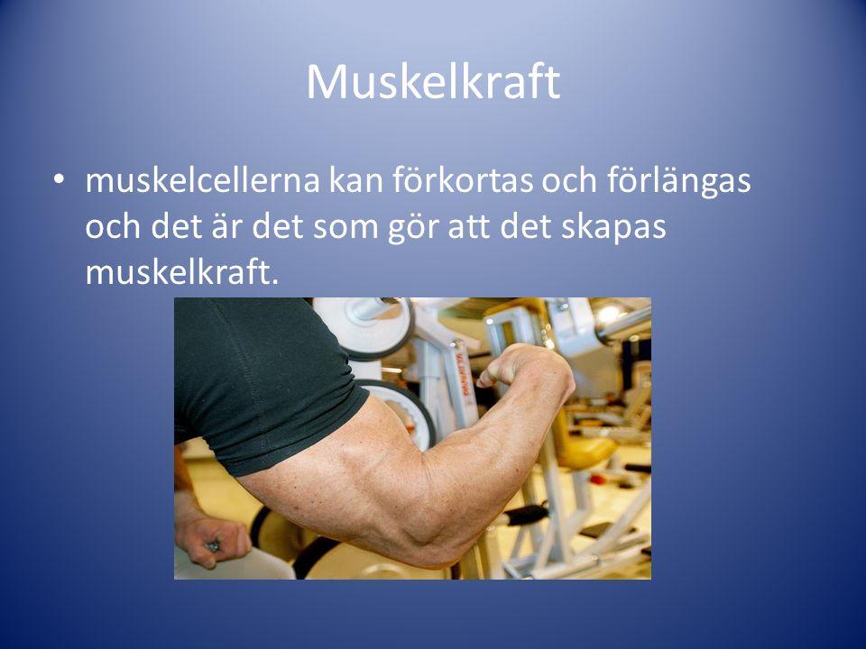 Muskelkraft muskelcellerna kan förkortas och förlängas och det är det som gör att det skapas muskelkraft.