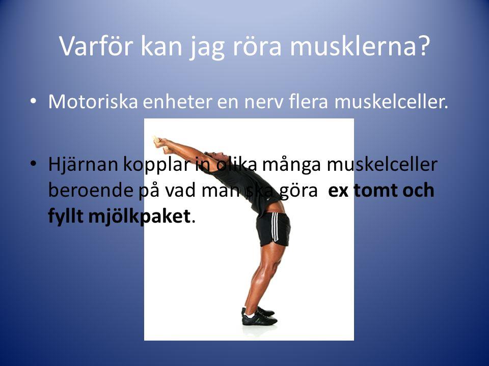 Varför kan jag röra musklerna? Motoriska enheter en nerv flera muskelceller. Hjärnan kopplar in olika många muskelceller beroende på vad man ska göra