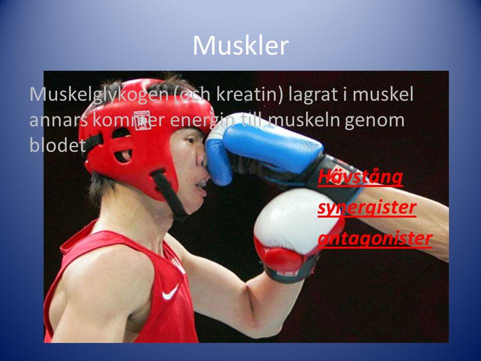 Muskler Muskelglykogen (och kreatin) lagrat i muskel annars kommer energin till muskeln genom blodet Hävstång synergister antagonister