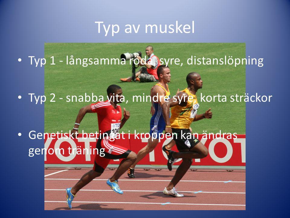 Typ av muskel Typ 1 - långsamma röda, syre, distanslöpning Typ 2 - snabba vita, mindre syre, korta sträckor Genetiskt betingat i kroppen kan ändras genom träning