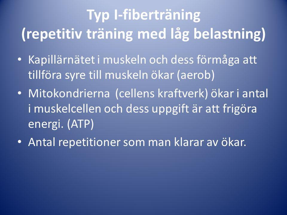 Typ I-fiberträning (repetitiv träning med låg belastning) Kapillärnätet i muskeln och dess förmåga att tillföra syre till muskeln ökar (aerob) Mitokondrierna (cellens kraftverk) ökar i antal i muskelcellen och dess uppgift är att frigöra energi.