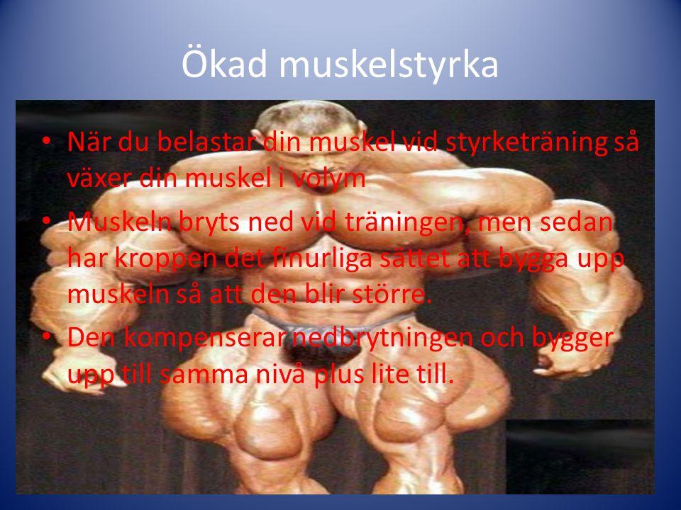Ökad muskelstyrka När du belastar din muskel vid styrketräning så växer din muskel i volym Muskeln bryts ned vid träningen, men sedan har kroppen det finurliga sättet att bygga upp muskeln så att den blir större.