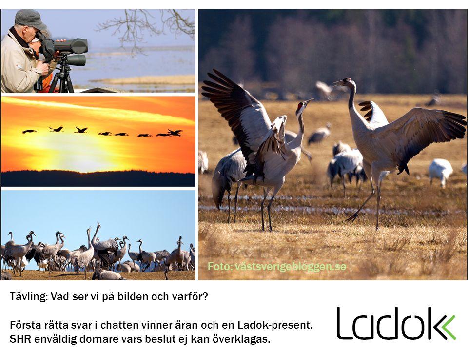 Foto: västsverigebloggen.se Tävling: Vad ser vi på bilden och varför? Första rätta svar i chatten vinner äran och en Ladok-present. SHR enväldig domar