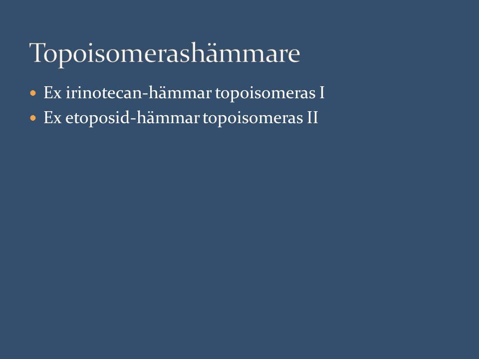 Ex irinotecan-hämmar topoisomeras I Ex etoposid-hämmar topoisomeras II