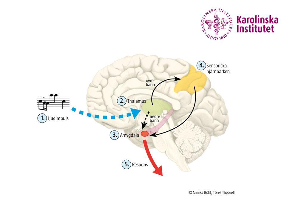 20 september 201628 Fortsatt om de biologiska effekterna av sånglektionen De professionella ökade sin hjärtfrekvensvariabilitet under sitt sjungande men inget sådant sågs hos amatörerna.