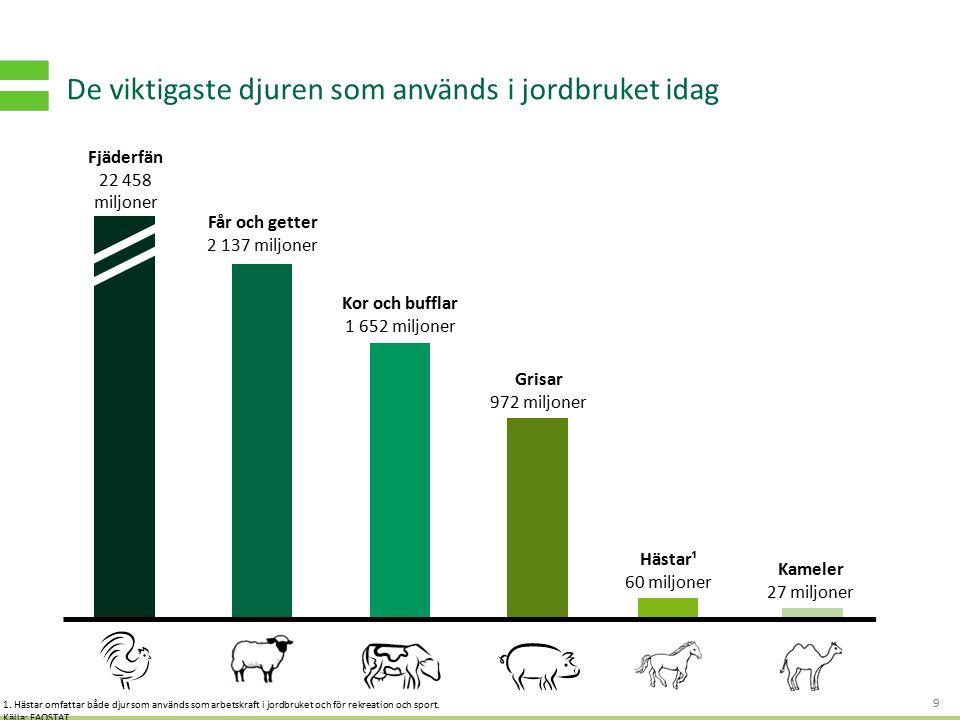 S TRATEGI - OCH AFFÄRSUTVECKLING FÖR HÅLLBART VÄRDESKAPANDE De viktigaste djuren som används i jordbruket idag 9 Fjäderfän 22 458 miljoner Får och get