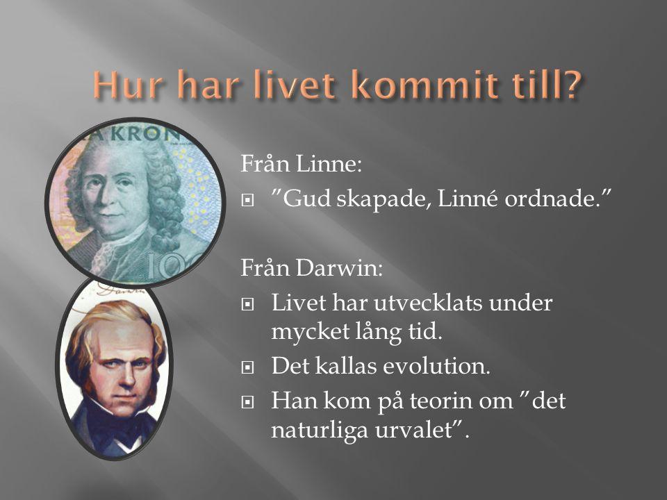Från Linne:  Gud skapade, Linné ordnade. Från Darwin:  Livet har utvecklats under mycket lång tid.