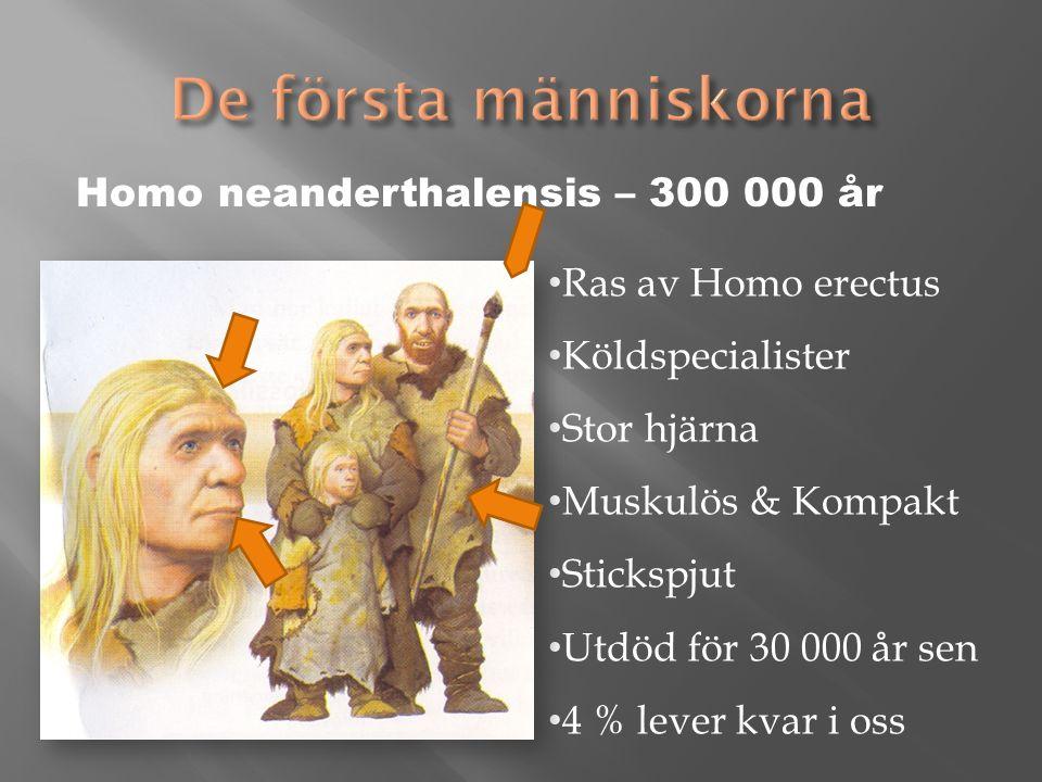 Homo sapiens – 195 000 år - Sapiens = klok, tänkande Isolerad grupp av Homo erectus Kastspjut och knivblad av sten Utrotade sabeltandat tiger, mammut ullhårig noshörning Målningar i grottor Anpassningar ger folkgrupper