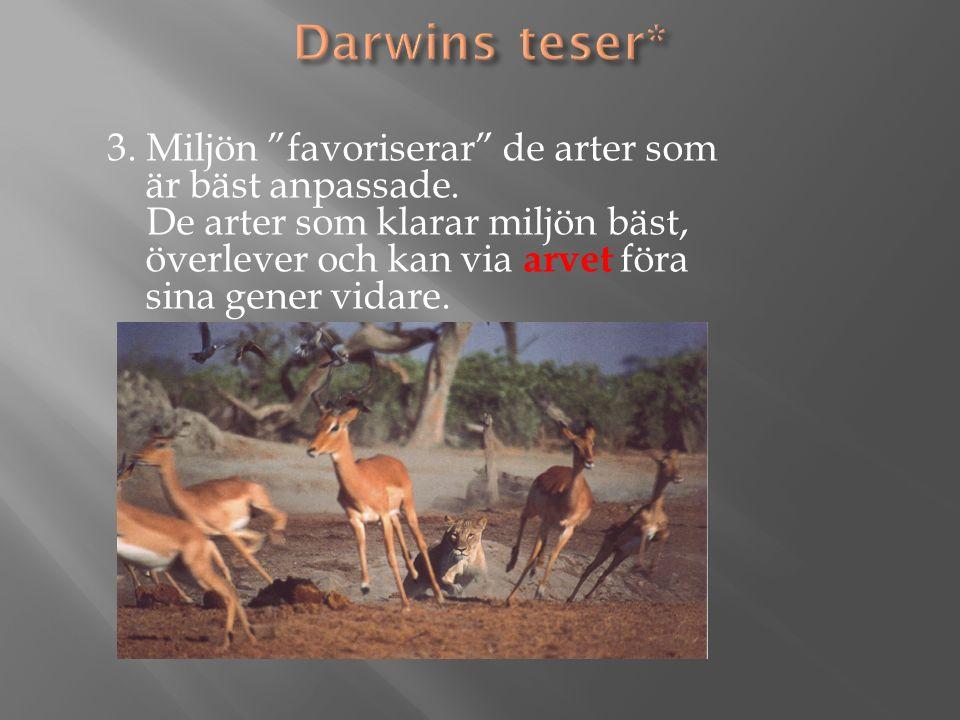 3. Miljön favoriserar de arter som är bäst anpassade.