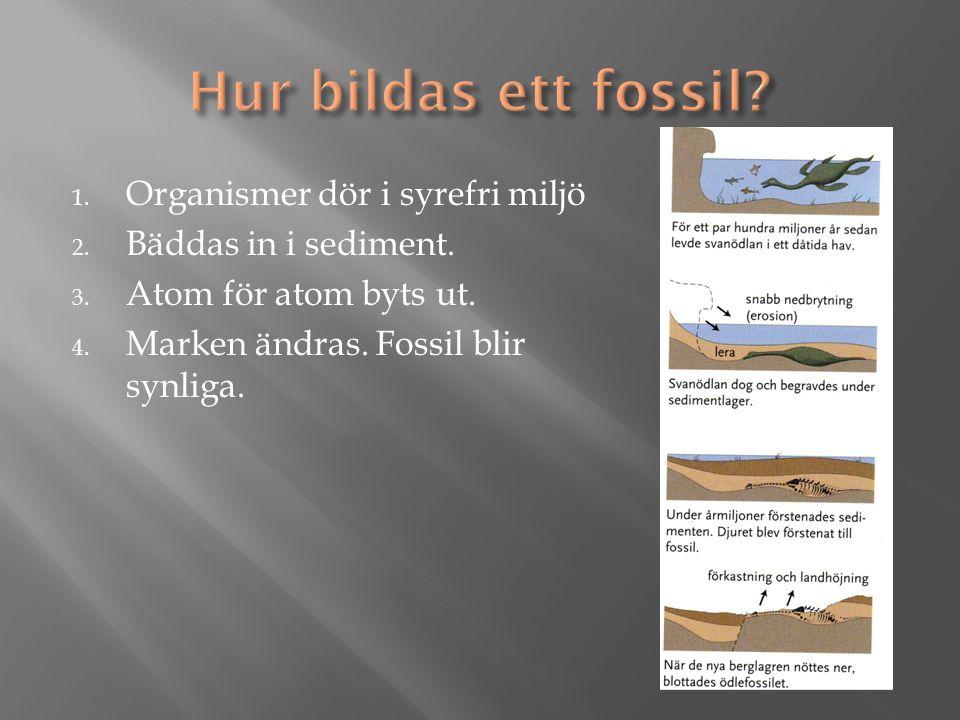 1. Organismer dör i syrefri miljö 2. Bäddas in i sediment.