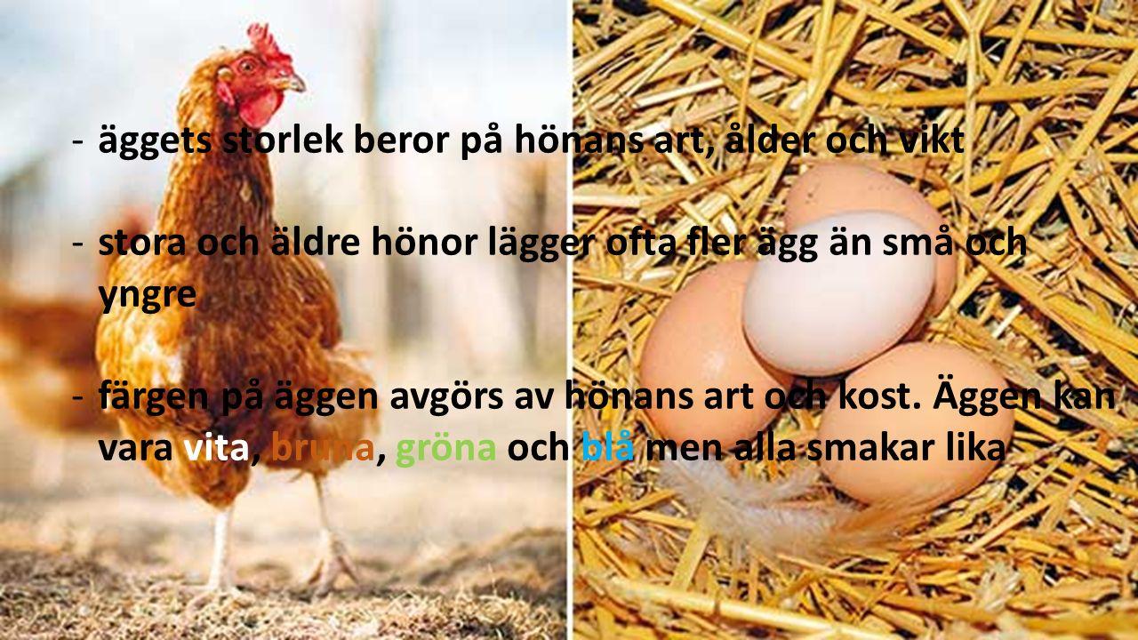 -äggets storlek beror på hönans art, ålder och vikt -stora och äldre hönor lägger ofta fler ägg än små och yngre -färgen på äggen avgörs av hönans art och kost.