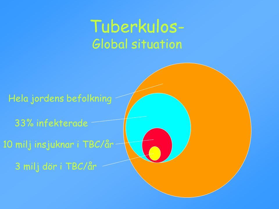 Tuberkulos- Global situation Hela jordens befolkning 33% infekterade 10 milj insjuknar i TBC/år 3 milj dör i TBC/år