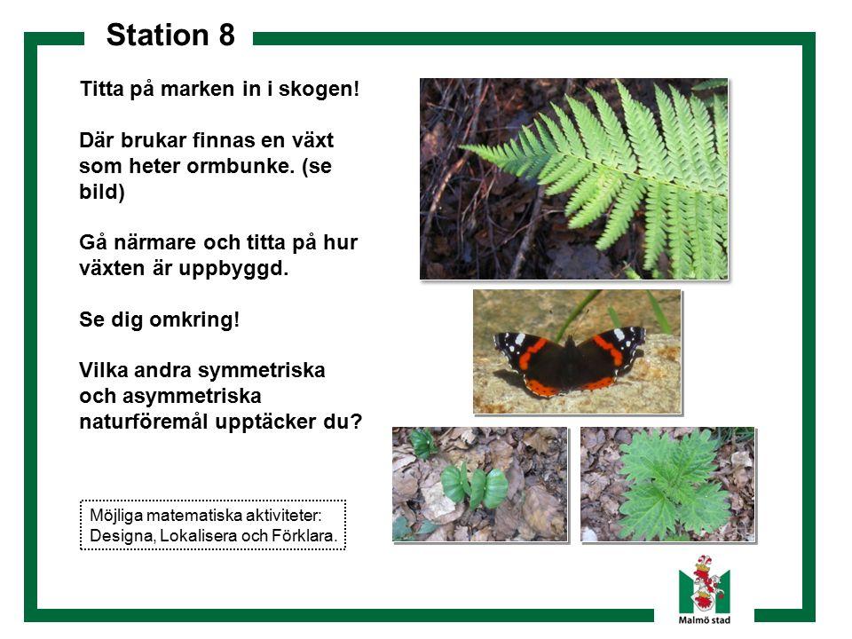 Station 8 Titta på marken in i skogen! Där brukar finnas en växt som heter ormbunke. (se bild) Gå närmare och titta på hur växten är uppbyggd. Se dig
