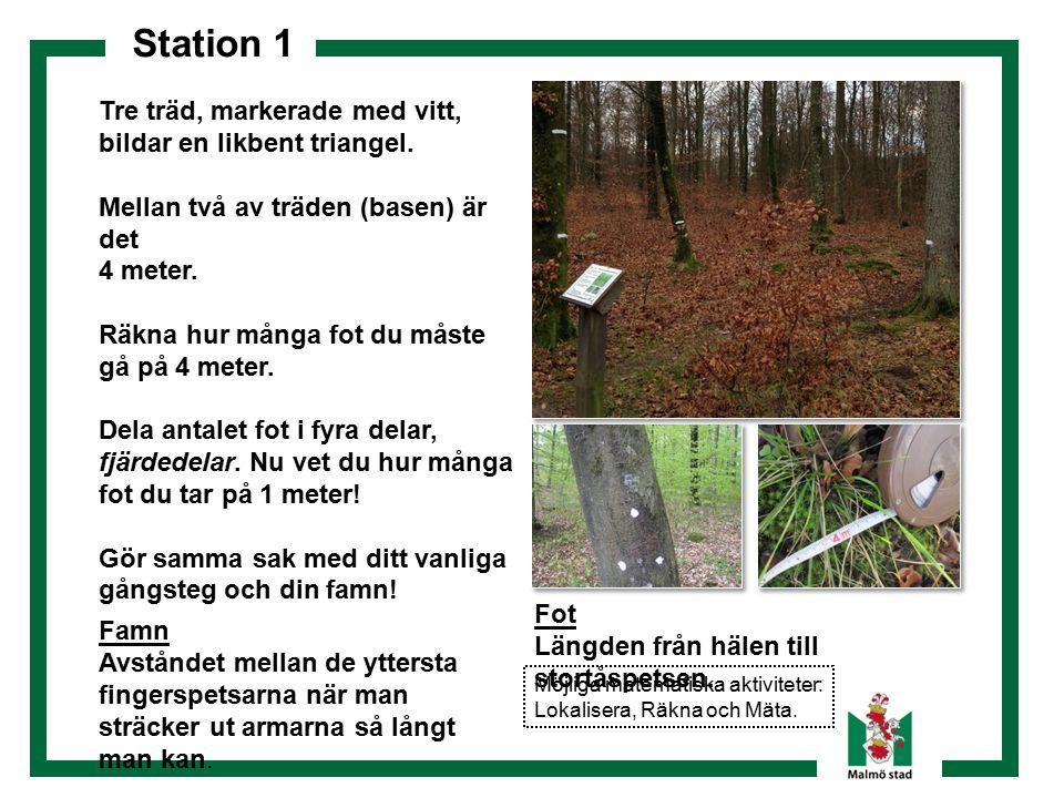 Station 1 Tre träd, markerade med vitt, bildar en likbent triangel. Mellan två av träden (basen) är det 4 meter. Räkna hur många fot du måste gå på 4