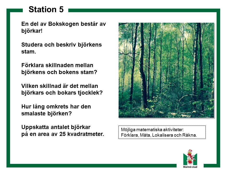 Station 5 En del av Bokskogen består av björkar! Studera och beskriv björkens stam. Förklara skillnaden mellan björkens och bokens stam? Vilken skilln