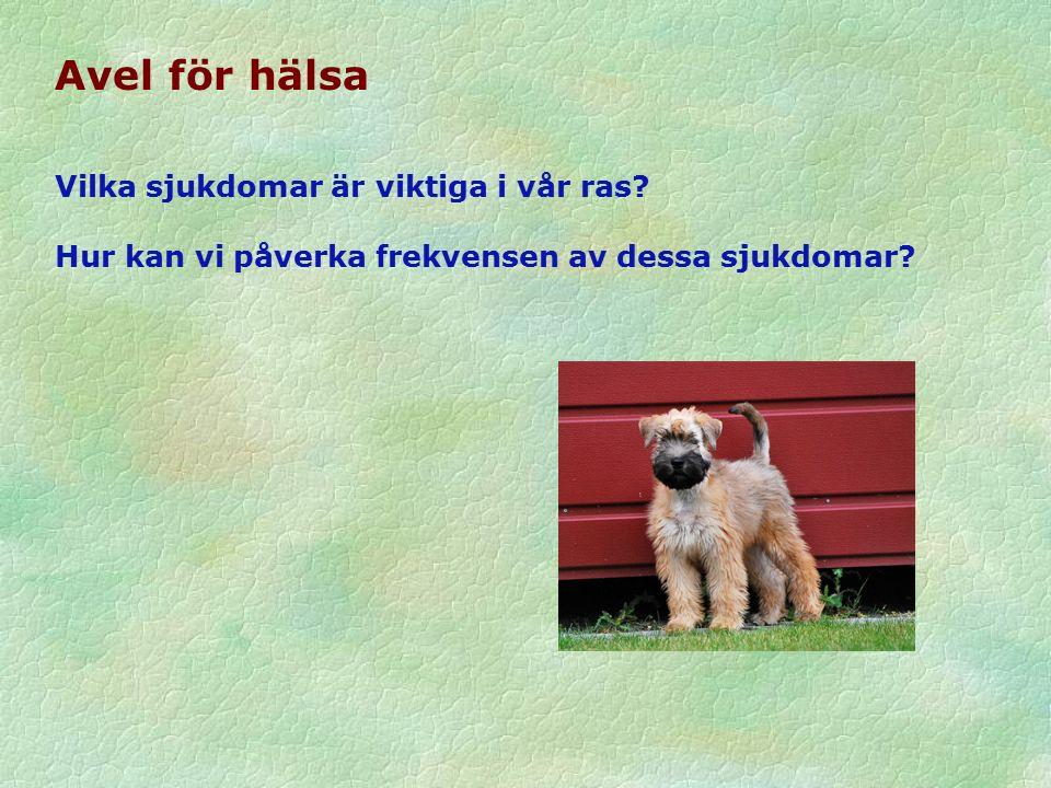 BPH arvbarhet Sju raser med mer än 200 testade hundar: Arvbarhet för 7 generella egenskaper = 0,00–0,80 Arvbarhet för 4-6 rasspecifika egenskaper = 0,01–0,60 Slutsats: samma egenskaper kan användas för alla raser i framtiden.