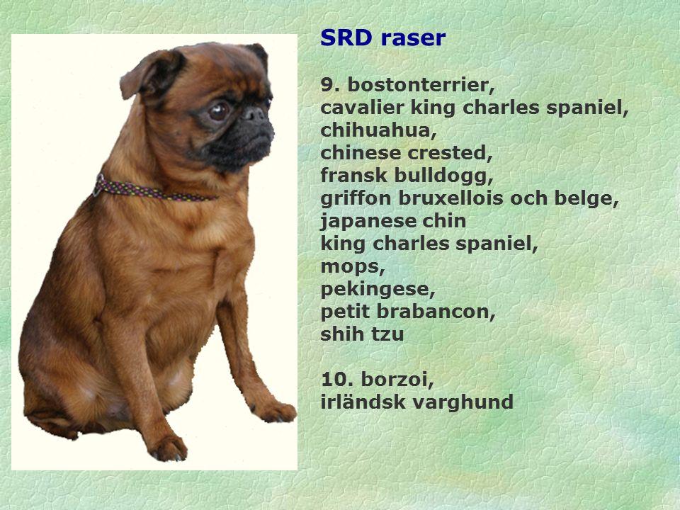 SRD raser 9.