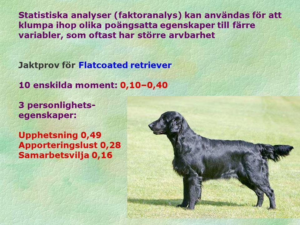 Statistiska analyser (faktoranalys) kan användas för att klumpa ihop olika poängsatta egenskaper till färre variabler, som oftast har större arvbarhet Jaktprov för Flatcoated retriever 10 enskilda moment: 0,10–0,40 3 personlighets- egenskaper: Upphetsning 0,49 Apporteringslust 0,28 Samarbetsvilja 0,16