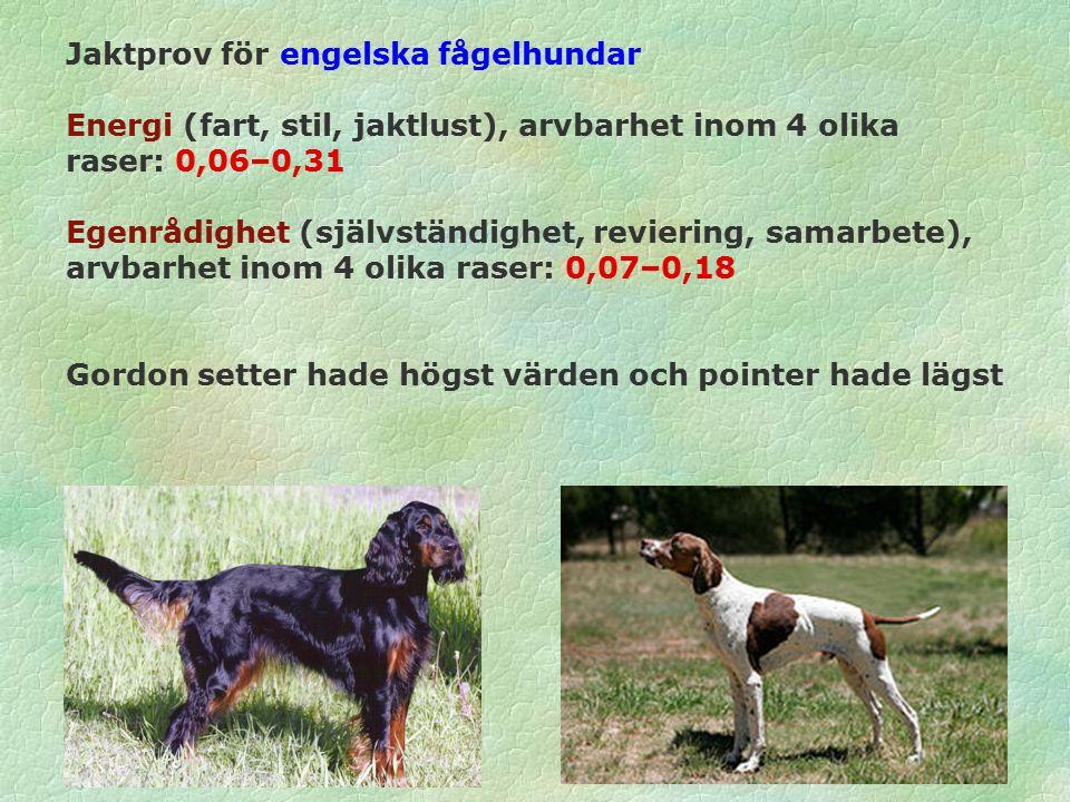Jaktprov för engelska fågelhundar Energi (fart, stil, jaktlust), arvbarhet inom 4 olika raser: 0,06–0,31 Egenrådighet (självständighet, reviering, samarbete), arvbarhet inom 4 olika raser: 0,07–0,18 Gordon setter hade högst värden och pointer hade lägst