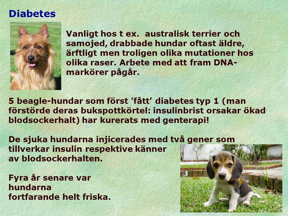 Diabetes Vanligt hos t ex.