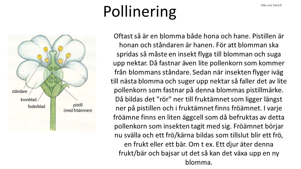Pollinering Oftast så är en blomma både hona och hane. Pistillen är honan och ståndaren är hanen. För att blomman ska spridas så måste en insekt flyga