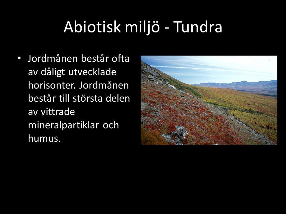 Abiotisk miljö - Tundra Jordmånen består ofta av dåligt utvecklade horisonter. Jordmånen består till största delen av vittrade mineralpartiklar och hu