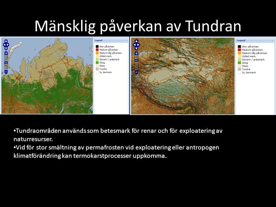 Mänsklig påverkan av Tundran Tundraområden används som betesmark för renar och för exploatering av naturresurser. Vid för stor smältning av permafrost