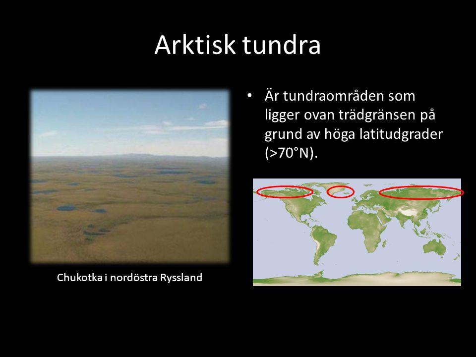 Arktisk tundra Är tundraområden som ligger ovan trädgränsen på grund av höga latitudgrader (>70°N). Chukotka i nordöstra Ryssland