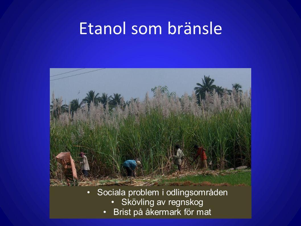 Etanol som bränsle Sociala problem i odlingsområden Skövling av regnskog Brist på åkermark för mat