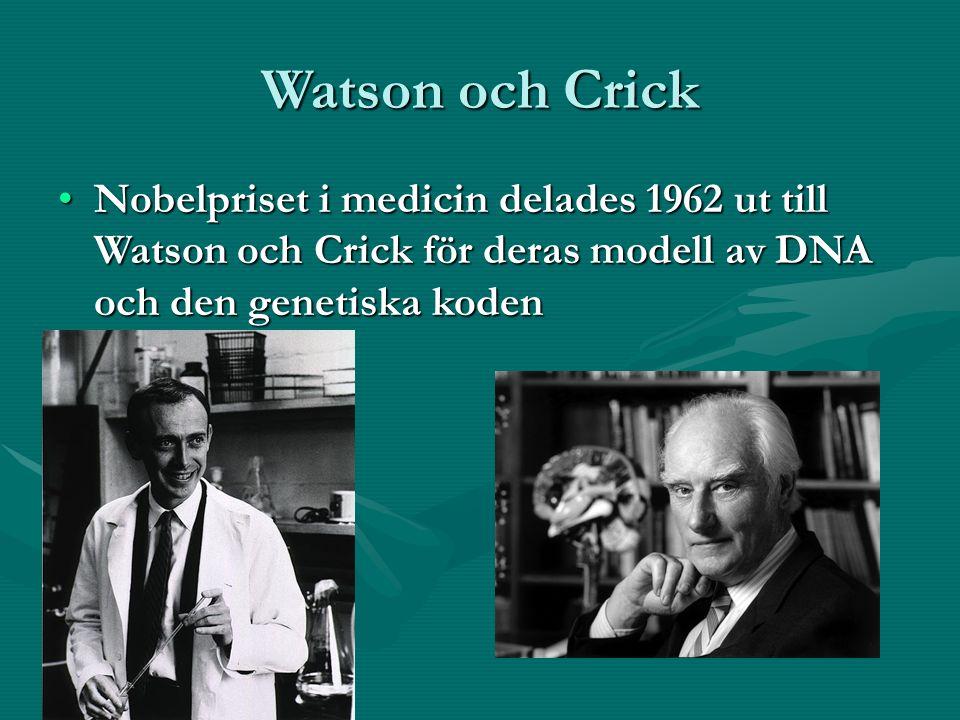 Watson och Crick Nobelpriset i medicin delades 1962 ut till Watson och Crick för deras modell av DNA och den genetiska kodenNobelpriset i medicin delades 1962 ut till Watson och Crick för deras modell av DNA och den genetiska koden